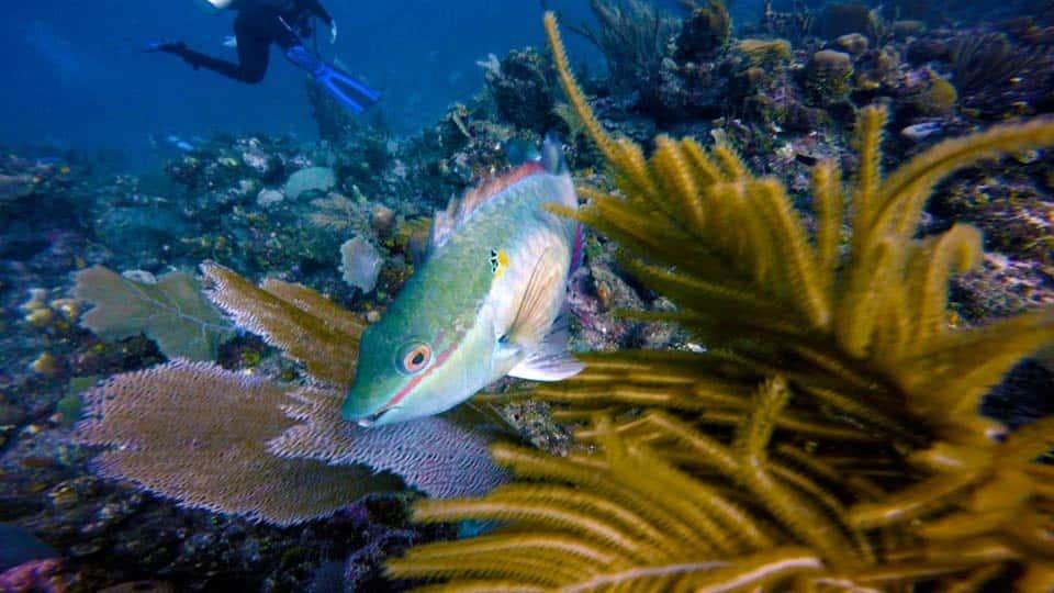 آموزش تقویت عکس های زیر آب با فتوشاپ