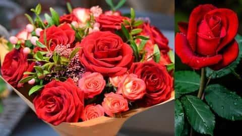 آموزش آنژیواسپرم: گیاه گلدار