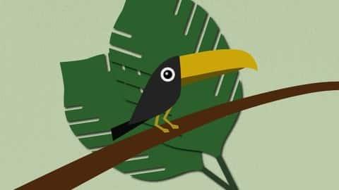 آموزش از Sketch Toucan را در Illustrator ایجاد کنید